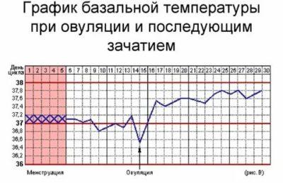 Как должна быть базальная температура при беременности
