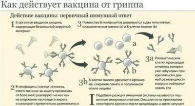 Как действует прививка на организм