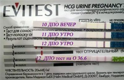 Сколько дней беременности показывает тест