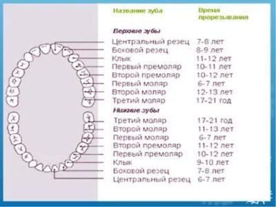 Сколько зубов должно быть у ребенка до 3 лет