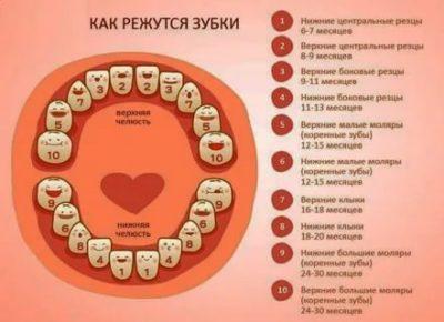 Какие зубы у детей прорезываются первыми