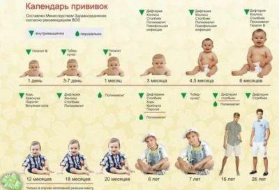 Какие прививки в каком возрасте делают