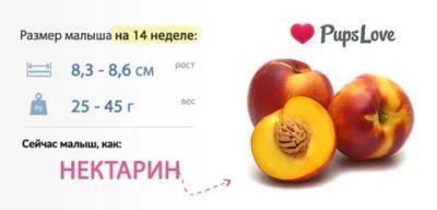 Какой размер плода на 14 неделе беременности