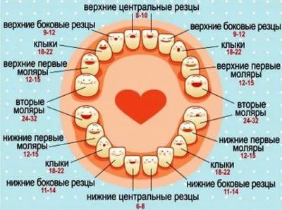 Сколько режутся зубы у детей