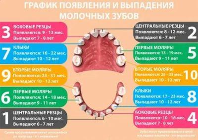 Какие зубы у детей выпадают