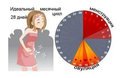 Сколько дней месячные у женщин