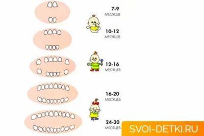 Сколько зубов у ребенка в 2 3 года