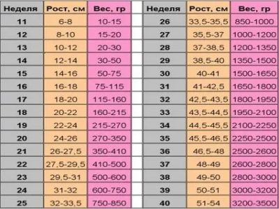 Сколько весит ребенок 26 27 недель