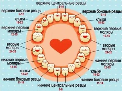Какие зубы у детей появляются первыми