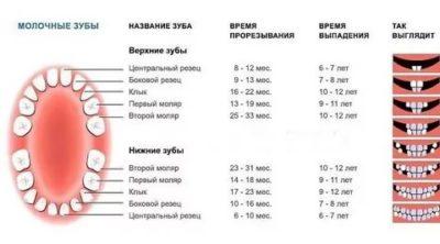 Сколько выпадает молочных зубов у детей