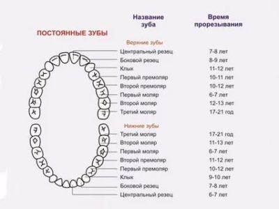 В каком возрасте появляются постоянные зубы
