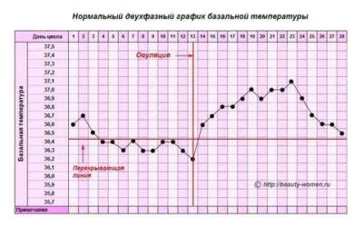 Какая должна быть базальная температура при беременности на ранних сроках