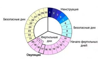 Сколько дней овуляции до месячных