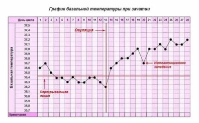 Что такое базальная температура тела