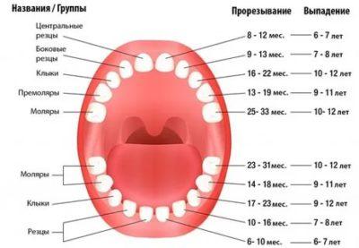 В каком возрасте вылезают все молочные зубы
