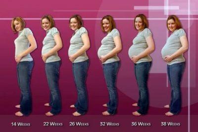 Когда начинается пятый месяц беременности